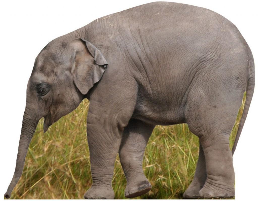 elephant cardboard