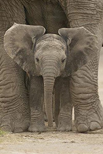 Cute Baby Elephant Poster for Sale
