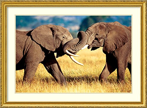 elephants prints