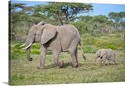 Mother and Baby Elephant Canvas
